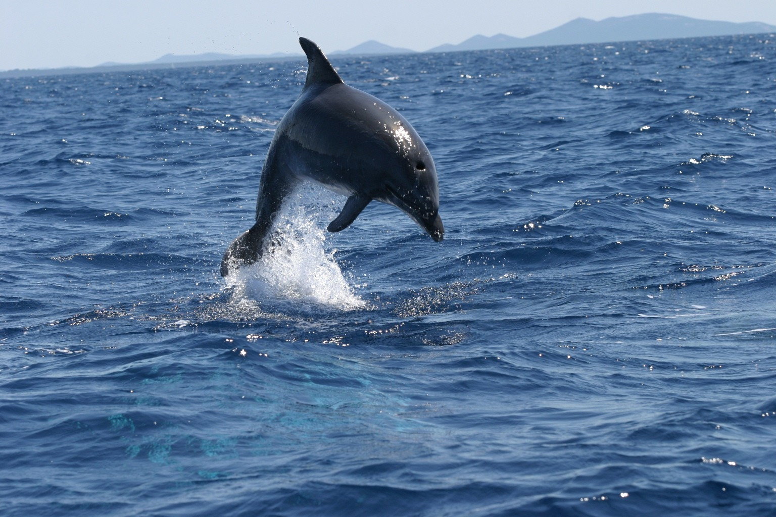 Photo of Valamar Adopt 42 Dolphins