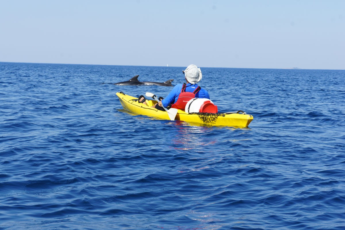 Photo of Dolphins Join Dubrovnik Kayak Route