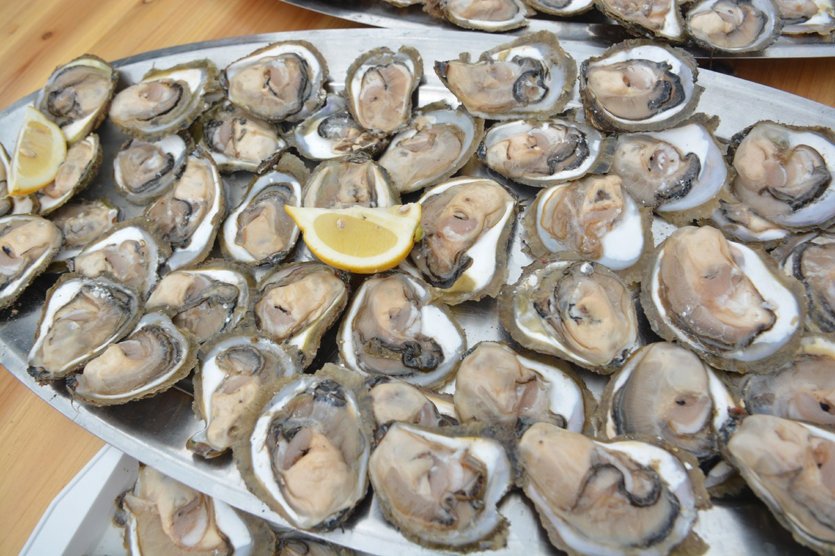 Photo of Ston Oyster Day: Come and try the most known sea aphrodisiac