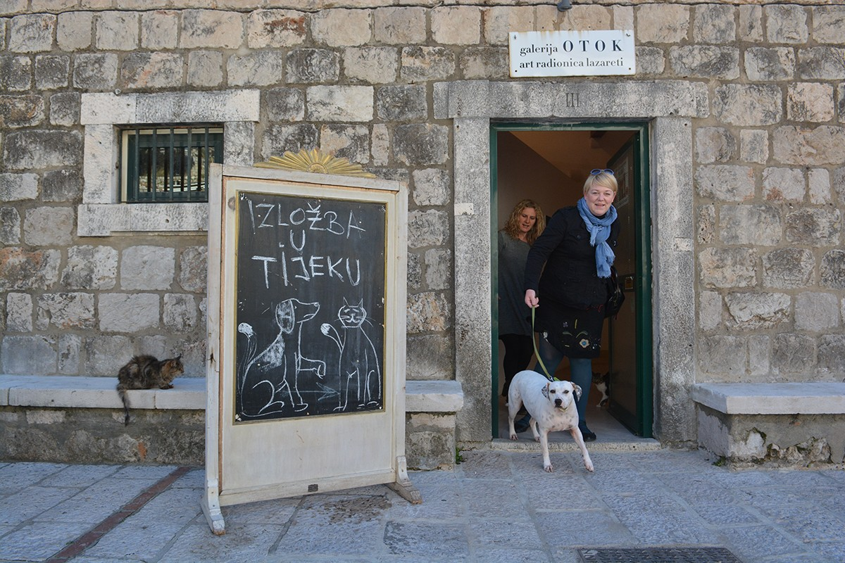 Photo of Dubrovnik helps abandoned animals