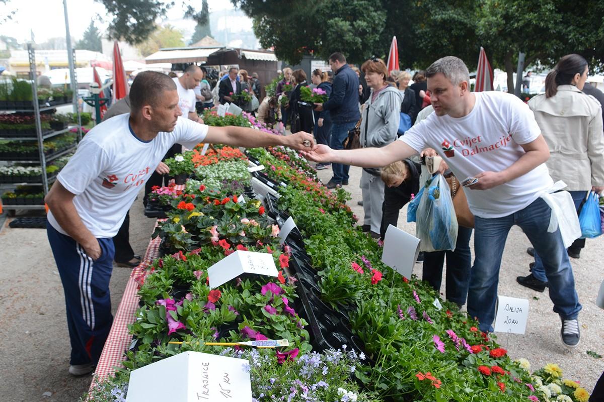 Photo of Photo: Dubrovnik Flower Fair impressed tourists