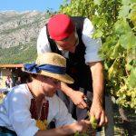 konavle grapes