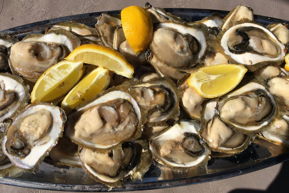 Photo of Photo Gallery: Ston Oyster Day 2016!