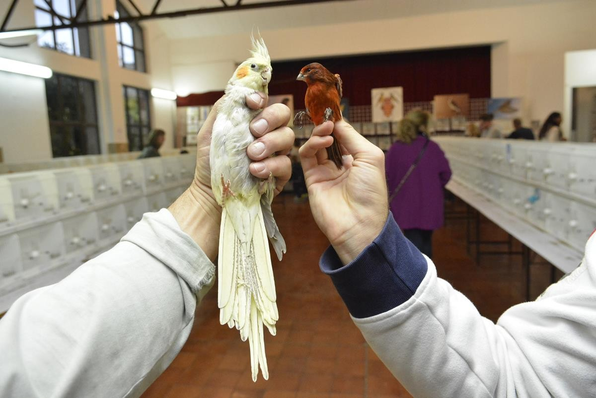 Photo of Photo Gallery: Colorful Exhibition of Birds!
