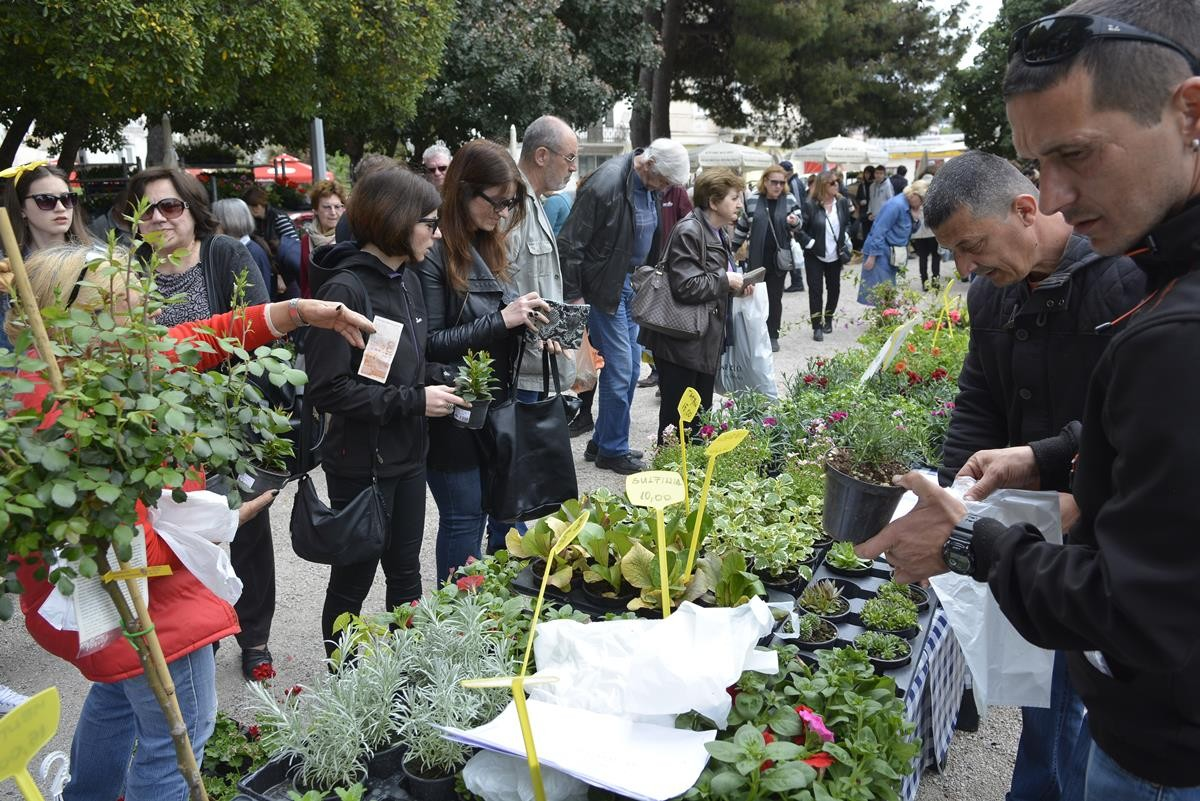 Photo of Photo Gallery: Beautiful Flower Fair to Mark the Spring Time