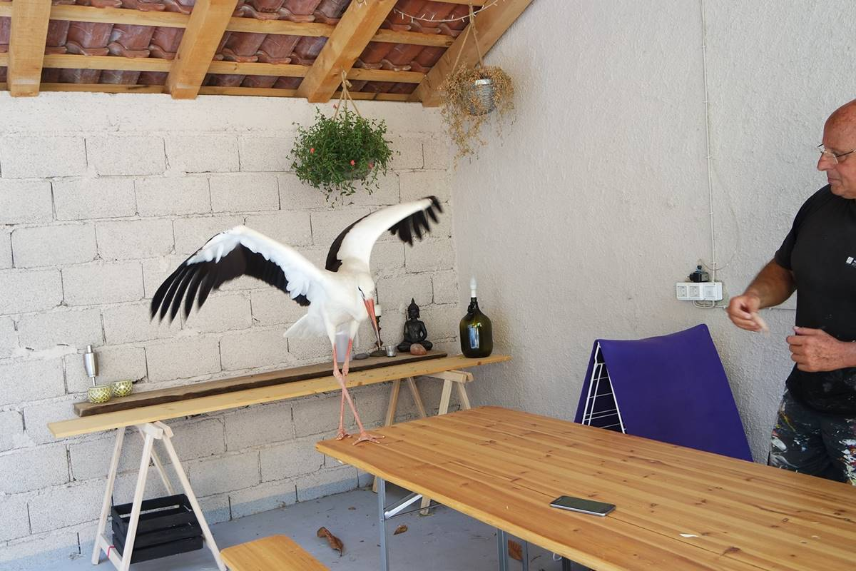 Photo of Meet Pedro, Beautiful Young Stork